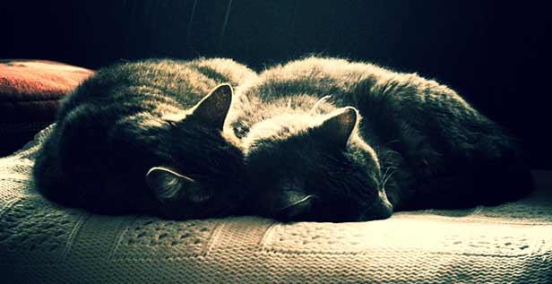 20130526_cats